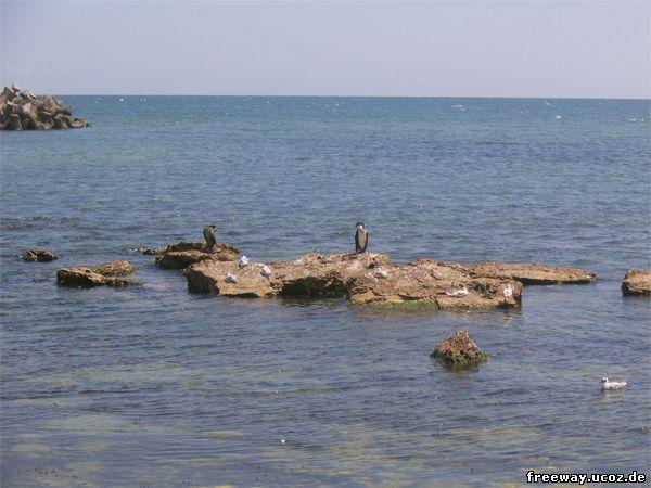 Представители пернатой фауны, отдыхающие на курорте Cap Aurora.